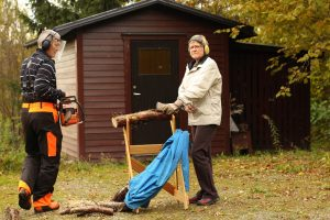 Sawing preparation with chain saw in autumn